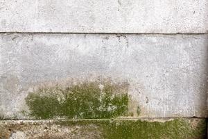 Mold on basement wall.