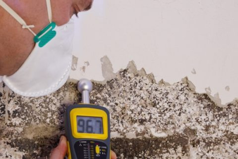 Check for mold growth in your walls