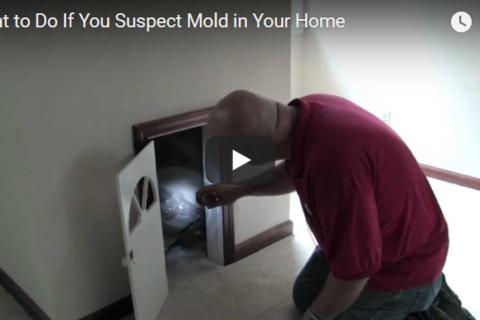 mold checklist
