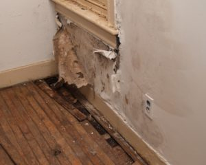Risk of Mold in Home