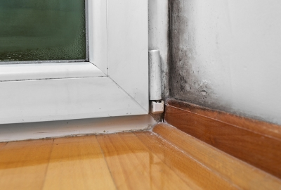 Common Causes of Household Mold