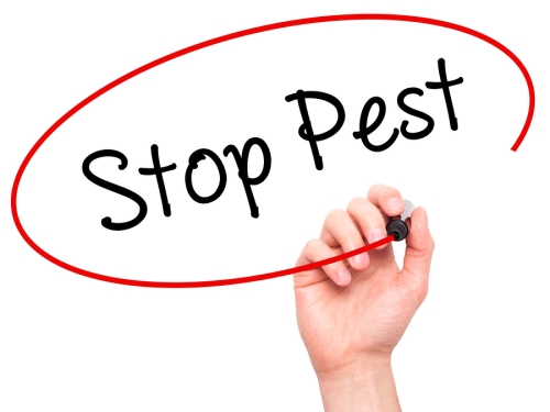 Stop Pest