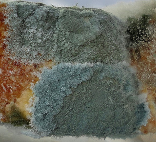 Close-up of green and black mold