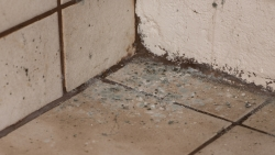 FAQs on Mold Answered by Budget Waterproofing